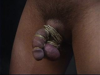 Captive Male Video